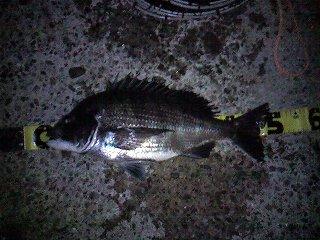 魚寸50cm