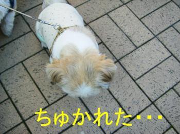 PA040103ちゅかれ