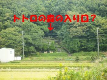 PA110071トトロの森