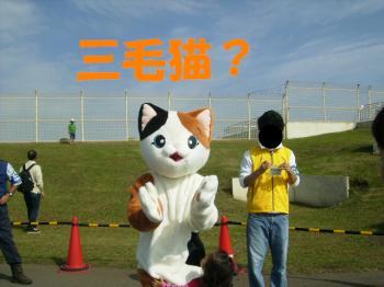 PA120092猫