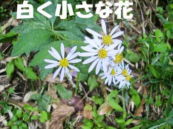 PA180013白い花