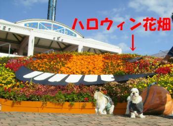 PA190038花畑