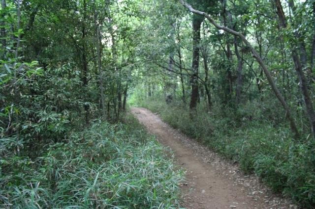 トトロの森1号地入り口