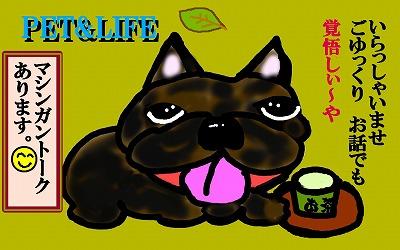 pet&life