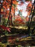 Kyoto062.jpg