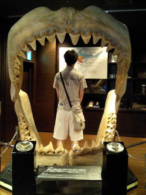 サメ080613