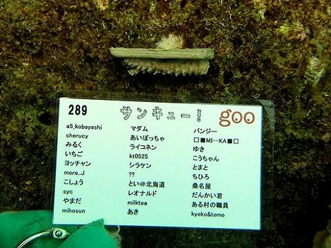 サンゴプロジェクト080325