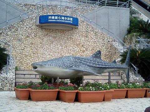美ら海水族館080613