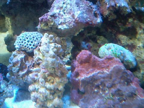 サンゴ入海080705