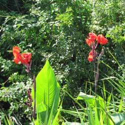 周辺の花2