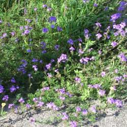 周辺の花5