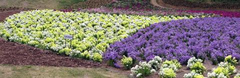 秩父ミューズパーク花の回廊