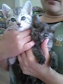 美人猫姉妹