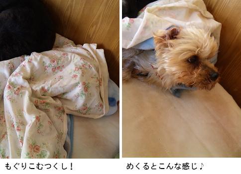 毛布とつくし