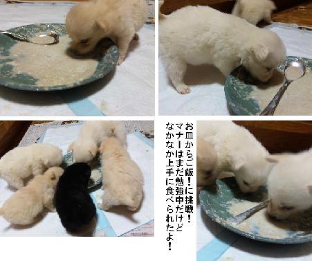 子犬のご飯タイム