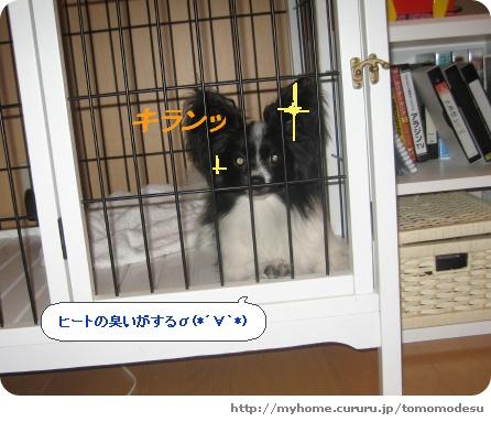 image1111095.jpg