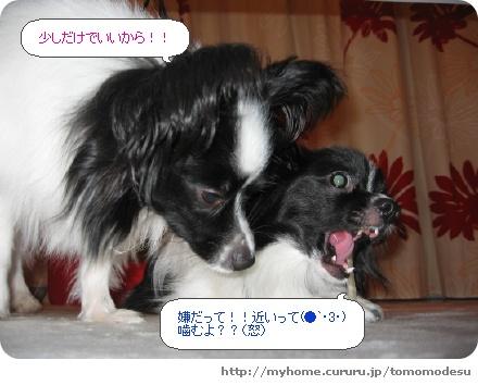image2709681.jpg