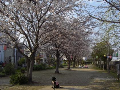 090404桜9