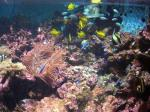 2F珊瑚と熱帯魚