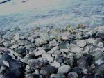 しかし水に近づくと海虫がいっぱいで気持ち悪い.