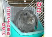 2004_0114_p_01ry