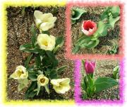 flower-001r