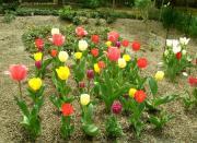 flower_002r