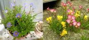 flower_004r