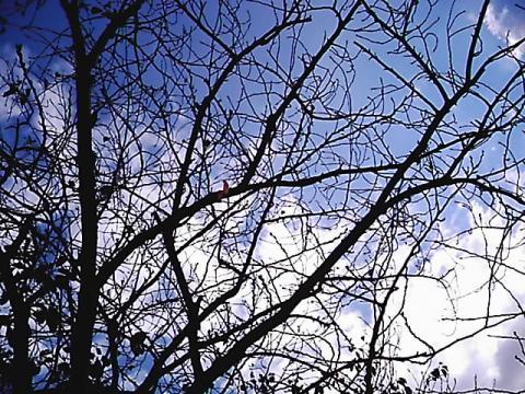 baretree.jpg