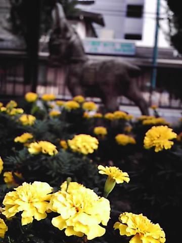 donkey.01JPG.jpg