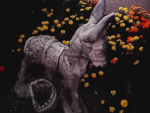 donkey02.jpg