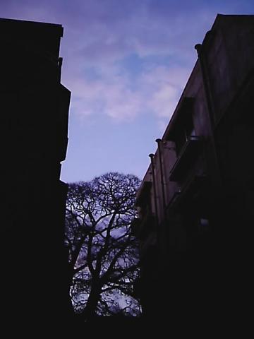 dusky04.jpg