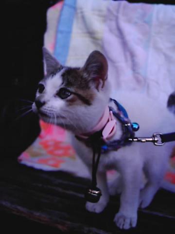 kittenJPG.jpg