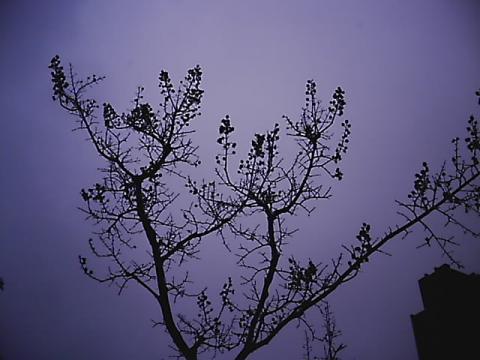 rainytree03.jpg