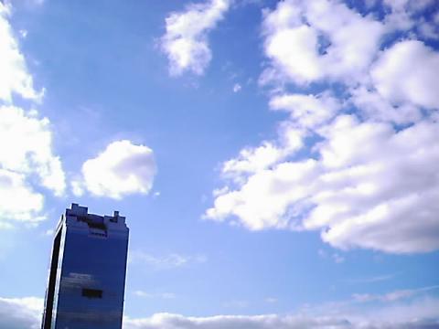 skybill.jpg