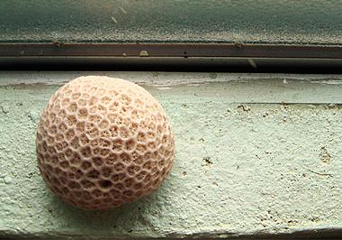 ハテルマのサンゴ玉の画像。とってもキレイでした