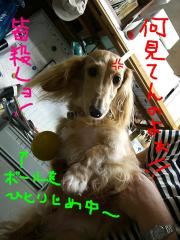 CIMG4708a.jpg