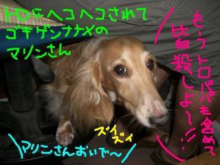 CIMG5698a.jpg