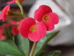 花キリン1