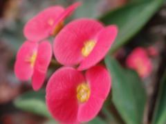 花キリン2