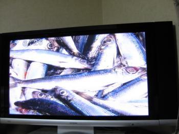 うるめTV 101