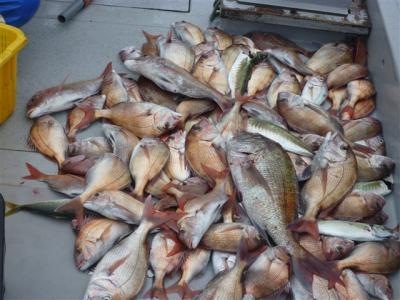 100枚以上釣れました