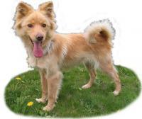 北海道の犬さん