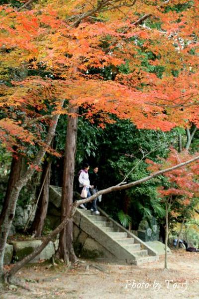 太子堂への石段
