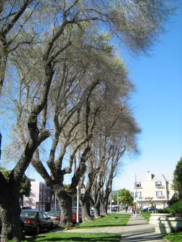 arguello_tree4.jpg