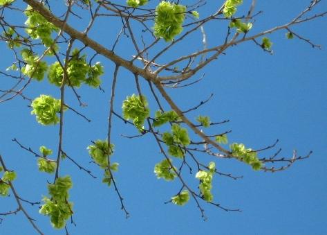 arguello_tree5.jpg