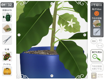 coffeetree5.jpg