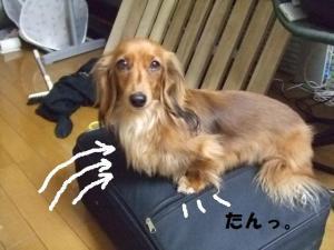 009_20090328195536.jpg