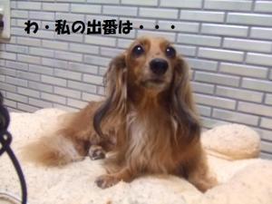 070_20081001133357.jpg