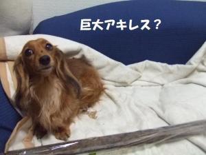 004 ぺ
